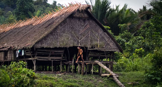 Warisan Budaya dan Kearifan Orang Mentawai_rumah adat